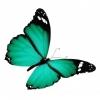 sticker-papillon-vert-rubis.jpg