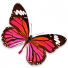 sticker-papillon-rouge-rose-et-violet.jpg