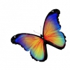 sticker-papillon-arc-en-ciel.jpg